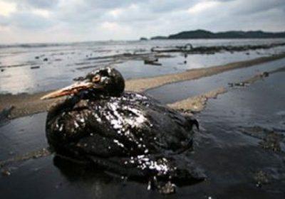 Exploitation pétrolière : un expert anticipe le danger des marées noires sur la biodiversité marine