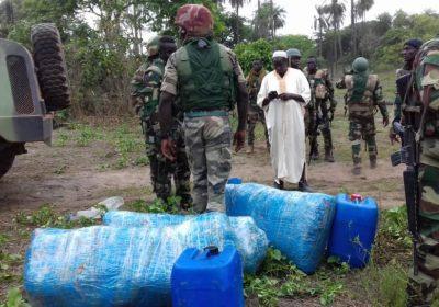 Ziguinchor et Bignona : la gendarmerie saisit plus de 200 Kg de chanvre indien