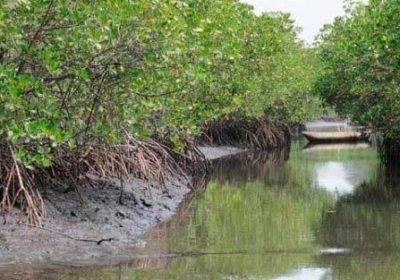 ARRONDISSEMENT DE TOUBACOUTA : UN ÉLU PLAIDE POUR L'ÉLECTRIFICATION DE 172 VILLAGES