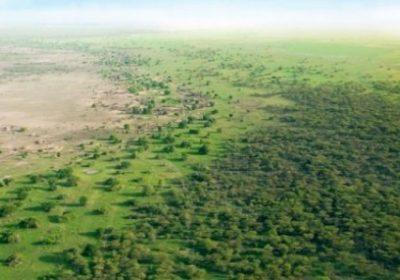 Grande muraille verte : Recherche expérimentale sur un site de 1000 ha
