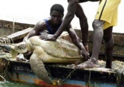 Protection des tortues marines et des oiseaux de mer : 62 prises accidentelles enregistrées dans 7 pays
